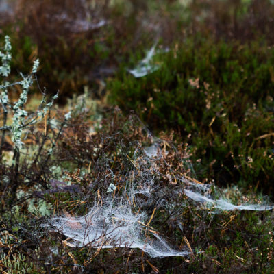 Mosses, Spider's Webs and Small Bushes