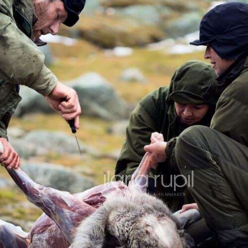 Reindeer Hunters Butchering a Prey
