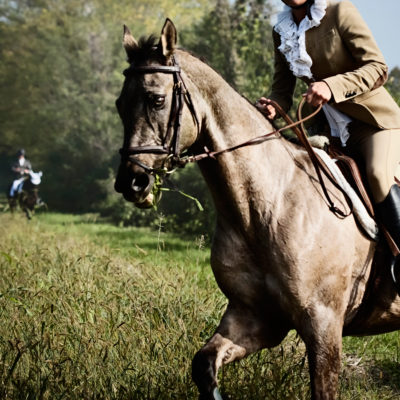 Field Horses and Horsemen when Hunting in the Friulian Plain