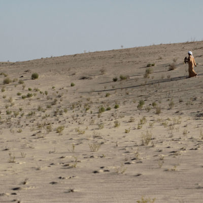 Following the Trails of the Houbara Bustard